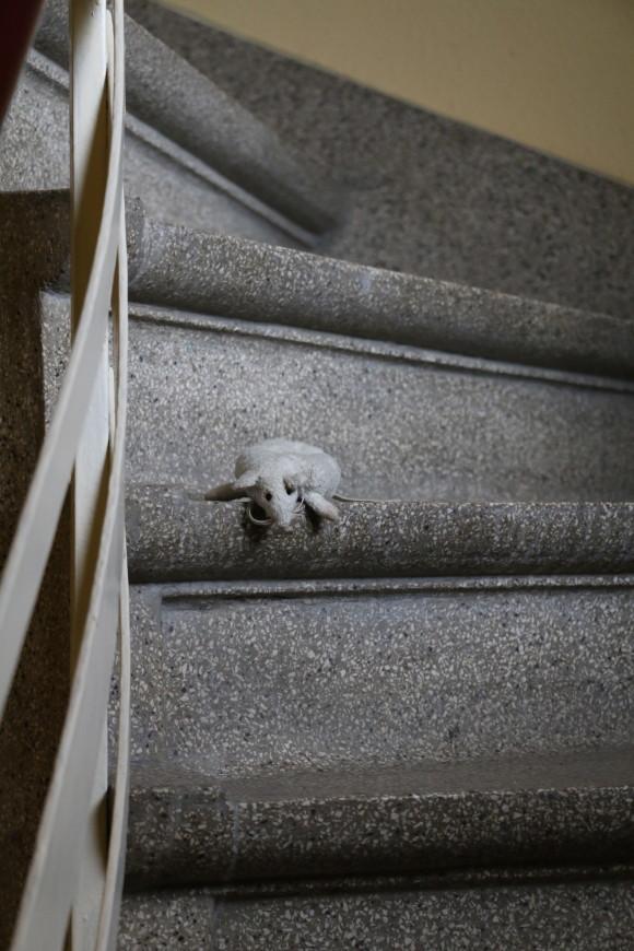 Se perdió el ratón